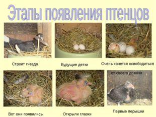 Строит гнездо Будущие детки Очень хочется освободиться от своего домика Вот