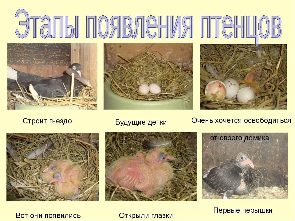 Строит гнездо Будущие детки Очень хочется освободиться от своего домика Вот...