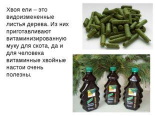Хвоя ели – это видоизмененные листья дерева. Из них приготавливают витаминизи