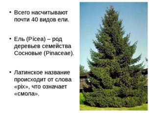 Всего насчитывают почти 40 видов ели. Ель (Pícea) – род деревьев семейства Со
