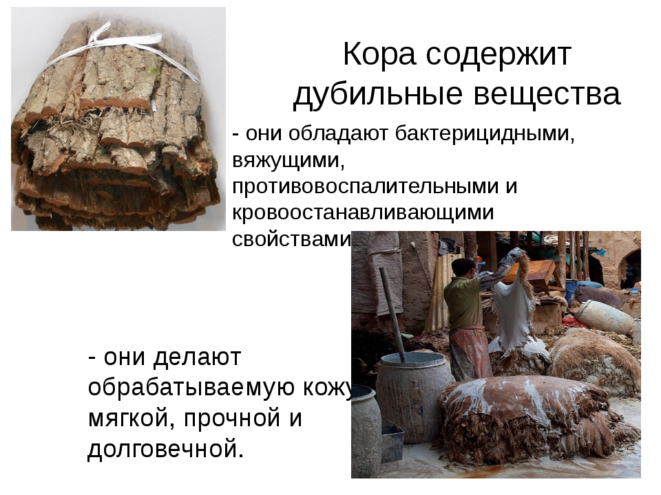 Кора содержит дубильные вещества - они делают обрабатываемую кожу мягкой, про...