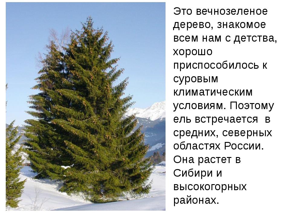 Это вечнозеленое дерево, знакомое всем нам с детства, хорошо приспособилось к...