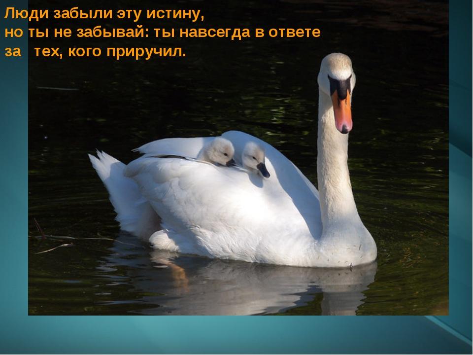 Люди забыли эту истину, но ты не забывай: ты навсегда в ответе за тех, кого п...