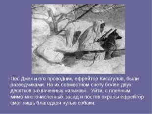 Пёс Джек и его проводник, ефрейтор Кисагулов, были разведчиками. На их совмес