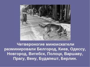 Четвероногие миноискатели разминировали Белгород, Киев, Одессу, Новгород, Ви