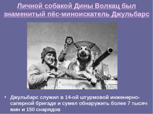 Личной собакой Дины Волкац был знаменитый пёс-миноискатель Джульбарс Джульбар