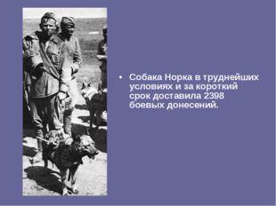 Собака Норка в труднейших условиях и за короткий срок доставила 2398 боевых д