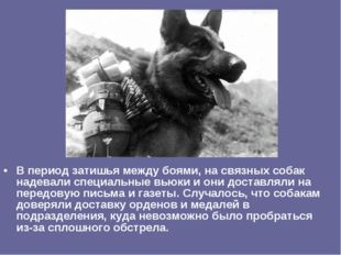 В период затишья между боями, на связных собак надевали специальные вьюки и о