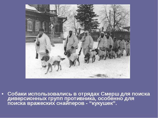 Собаки использовались в отрядах Смерш для поиска диверсионных групп противник...
