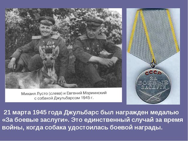 21 марта 1945 года Джульбарс был награжден медалью «За боевые заслуги». Это...