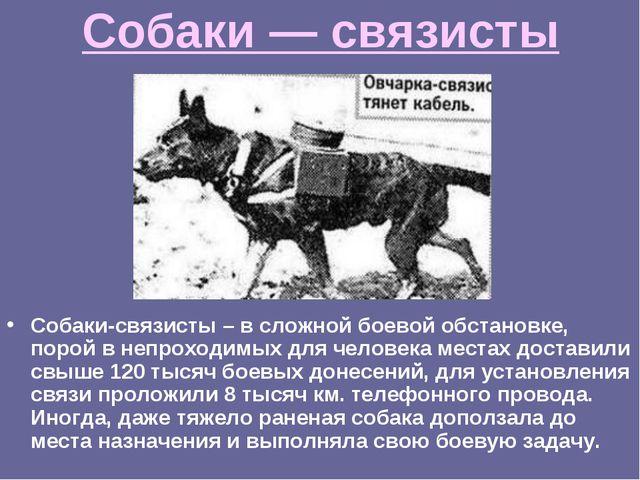 Собаки — связисты Собаки-связисты – в сложной боевой обстановке, порой в непр...