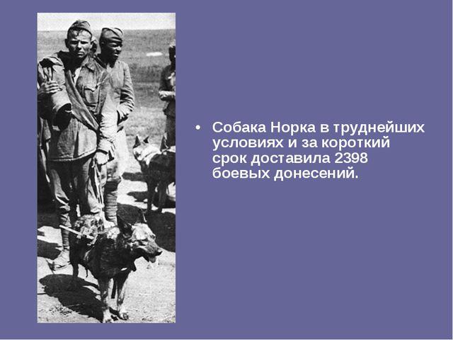 Собака Норка в труднейших условиях и за короткий срок доставила 2398 боевых д...
