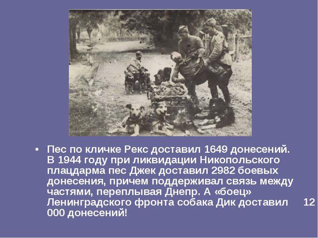Пес по кличке Рекс доставил 1649 донесений. В 1944 году при ликвидации Никопо...