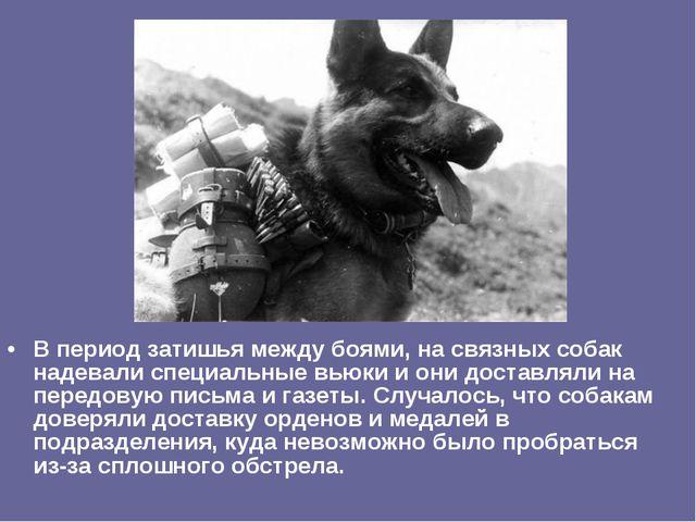 В период затишья между боями, на связных собак надевали специальные вьюки и о...