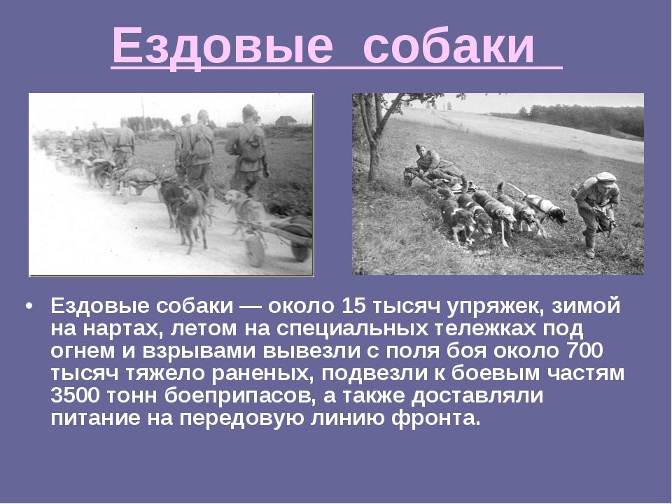 Ездовые собаки Ездовые собаки — около 15 тысяч упряжек, зимой на нартах, лето...