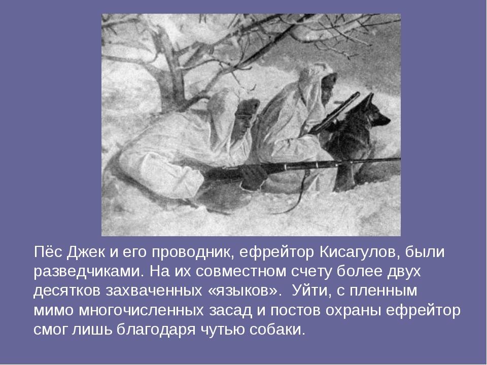 Пёс Джек и его проводник, ефрейтор Кисагулов, были разведчиками. На их совмес...