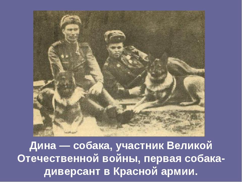 Дина — собака, участник Великой Отечественной войны, первая собака-диверсант...