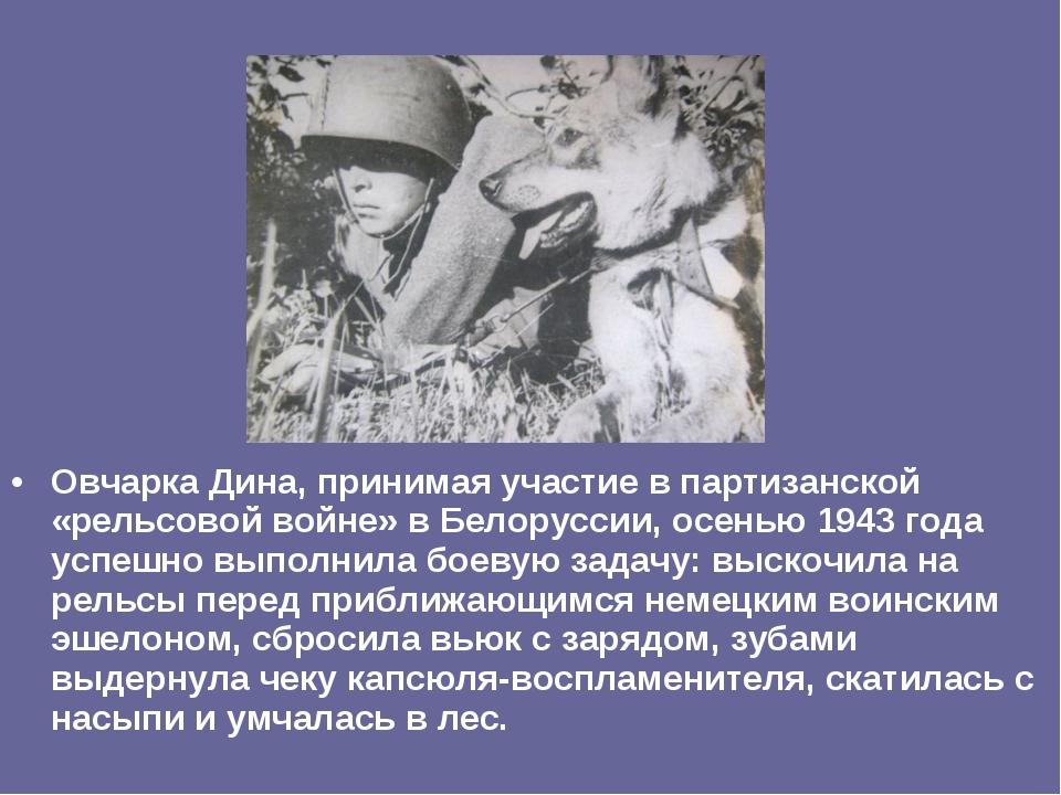 Овчарка Дина, принимая участие в партизанской «рельсовой войне» в Белоруссии,...