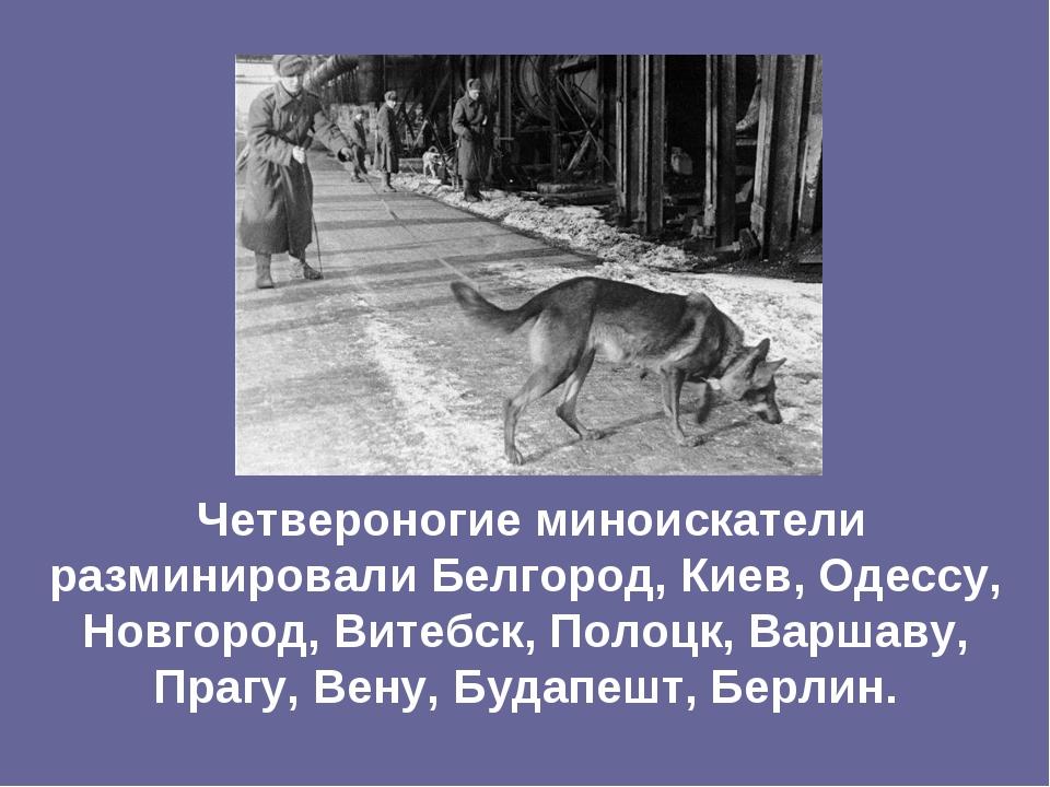 Четвероногие миноискатели разминировали Белгород, Киев, Одессу, Новгород, Ви...