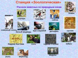 Станция «Зоологическая» Рассели животных по природным зонам