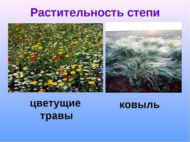 Растительность степи