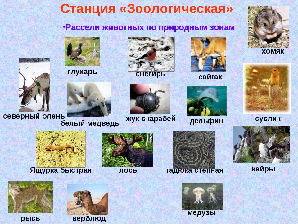 дополнит картинки животных и растений природных зон печи