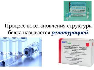 Процесс восстановления структуры белка называется ренатурацией.
