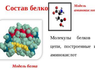 Молекулы белков – цепи, построенные из аминокислот Состав белков Модель белка