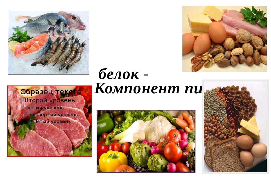 белок - Компонент пищи