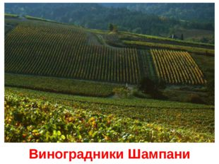 Виноградники Шампани