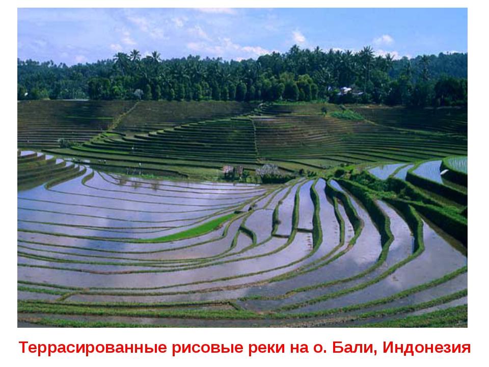 Террасированные рисовые реки на о. Бали, Индонезия