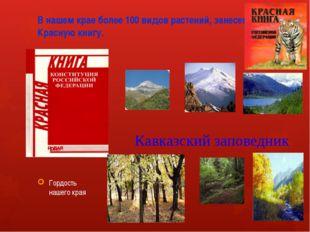 В нашем крае более 100 видов растений, занесенных в Красную книгу. Гордость н