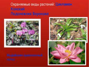 Охраняемые виды растений: Цикламен Конский Подснежник Воронова Индийские орех