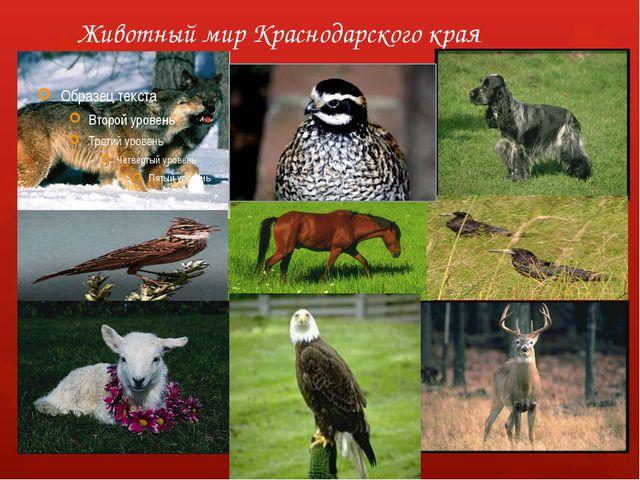 Животный мир Краснодарского края