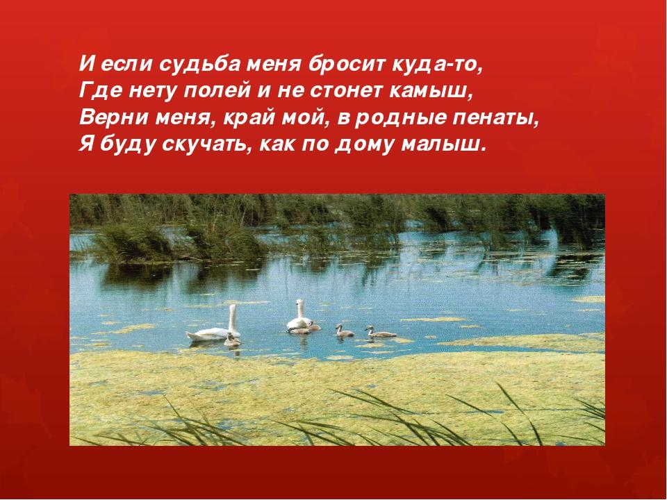 И если судьба меня бросит куда-то, Где нету полей и не стонет камыш, Верни ме...