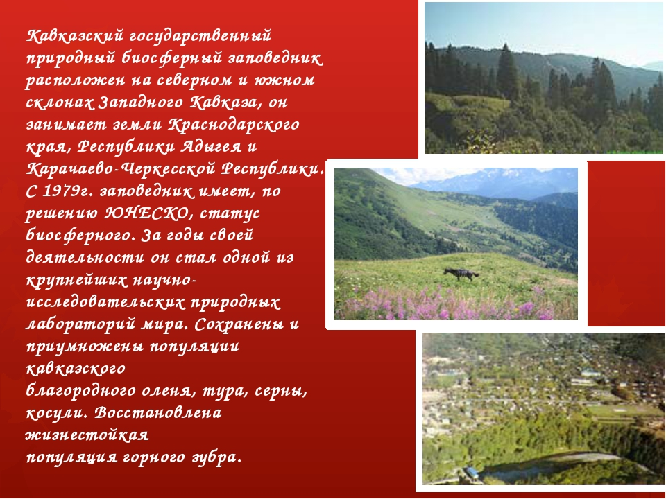 Кавказский государственный природный биосферный заповедник расположен на севе...