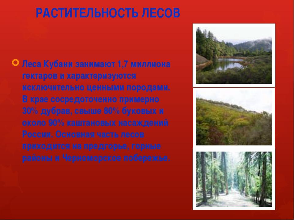 РАСТИТЕЛЬНОСТЬ ЛЕСОВ Леса Кубани занимают 1,7 миллиона гектаров и характеризу...