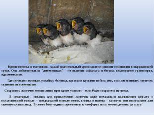 Кроме погоды и охотников, самый значительный урон касатке наносят изменения