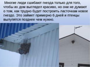 Многие люди сшибают гнезда только для того, чтобы их дом выглядел красиво, н