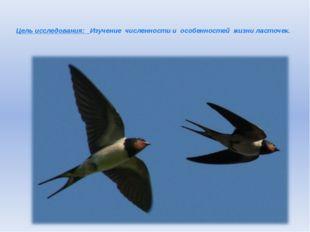 Цель исследования: Изучение численности и особенностей жизни ласточек.