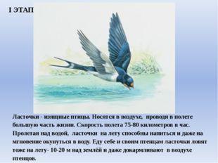 Ласточки - изящные птицы. Носятся в воздухе, проводя в полете большую ча