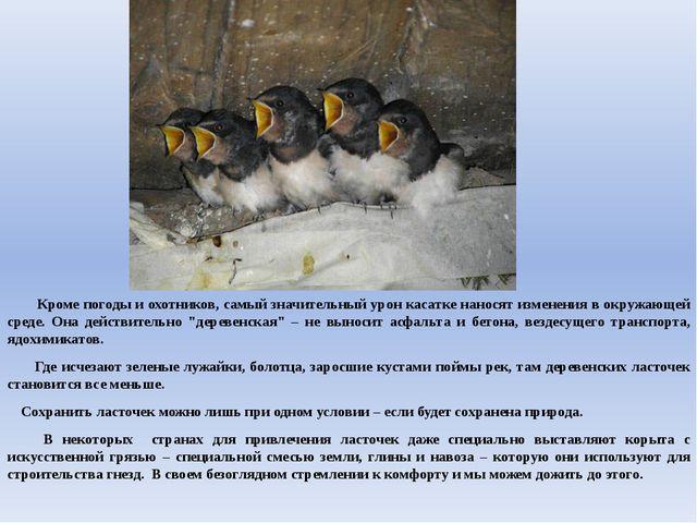 Кроме погоды и охотников, самый значительный урон касатке наносят изменения...