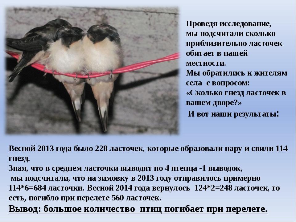 Проведя исследование, мы подсчитали сколько приблизительно ласточек обитает...