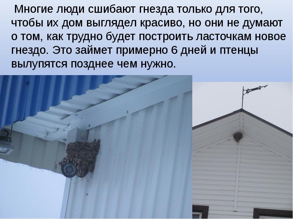 Многие люди сшибают гнезда только для того, чтобы их дом выглядел красиво, н...