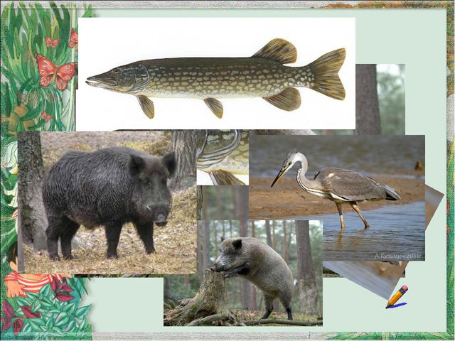 Символы групп (вагонов) Звери Рыбы Птицы