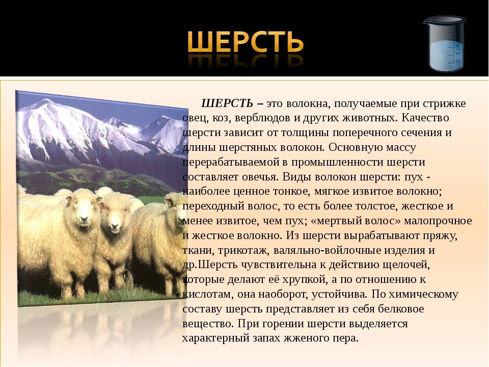 ШЕРСТЬ – это волокна, получаемые при стрижке овец, коз, верблюдов и других ж...