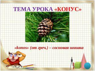 ТЕМА УРОКА «КОНУС» «konos» (от греч.) – сосновая шишка