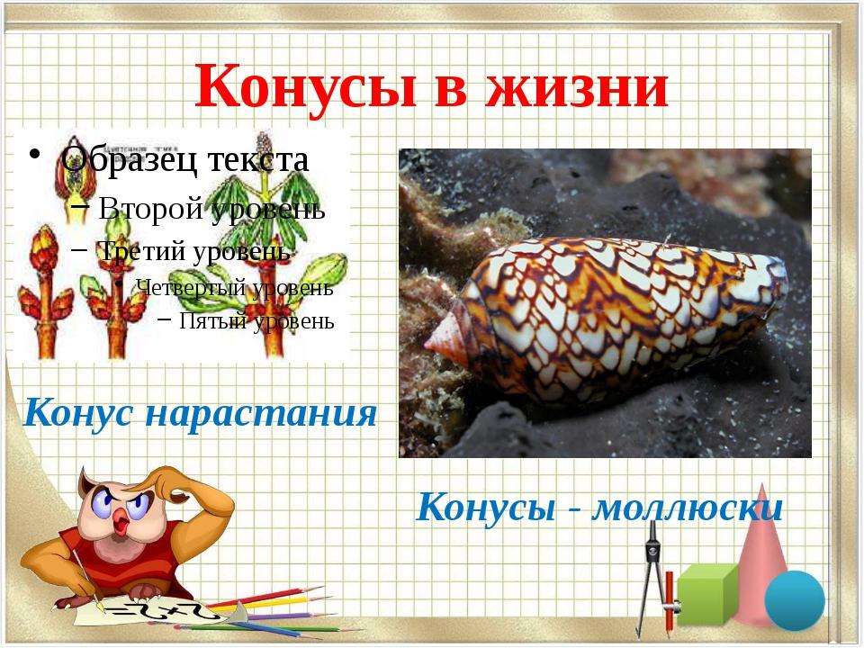 Конусы в жизни Конус нарастания Конусы - моллюски