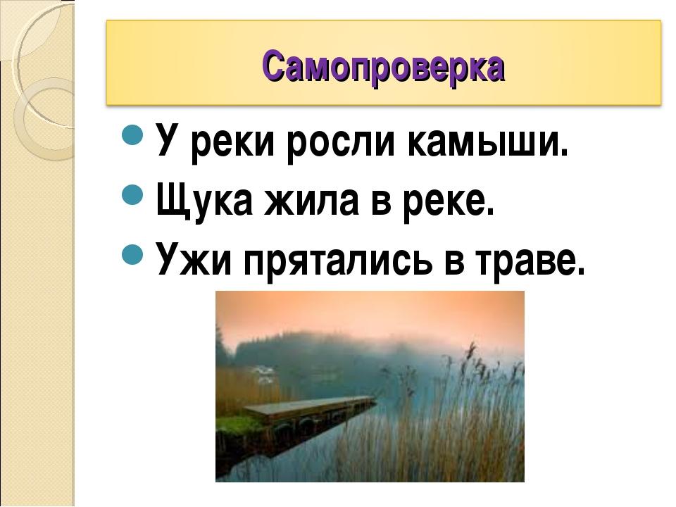 У реки росли камыши. Щука жила в реке. Ужи прятались в траве.