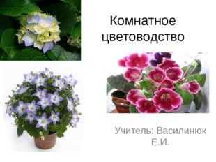 Комнатное цветоводство Учитель: Василинюк Е.И.